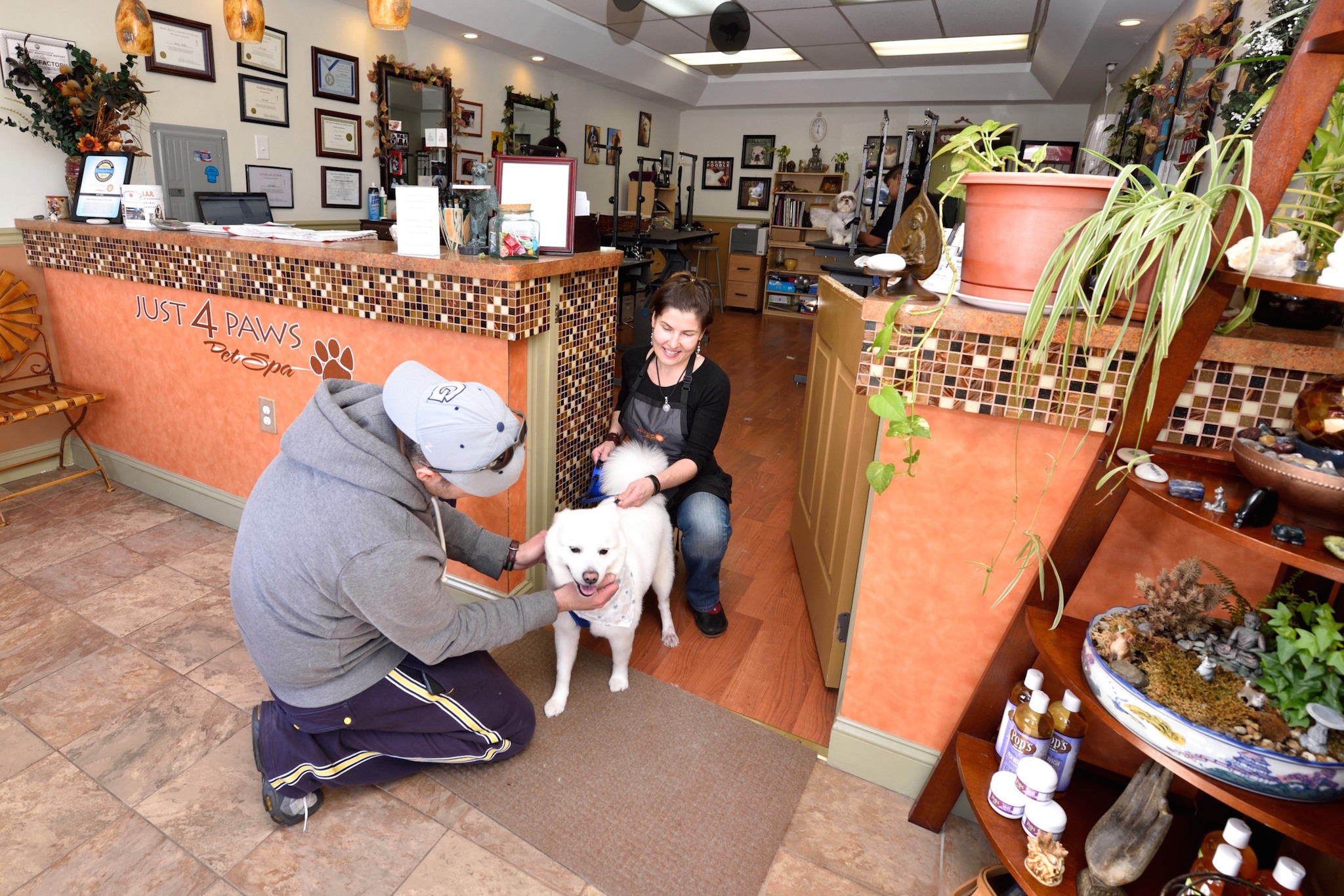 franchise opportunities just 4 paws pet spa