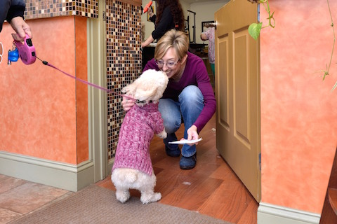 Franchise opportunities just 4 paws pet spa for 4 paws grooming salon